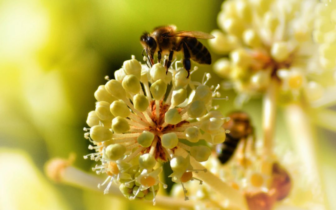 Mason Bee Care Recommendations